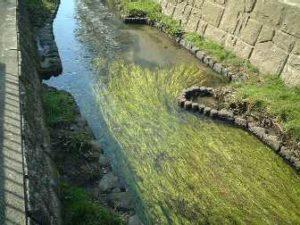 安産川とミクリ